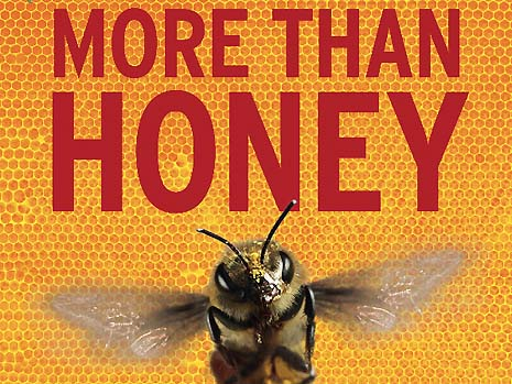 85944_film_more_than_honey