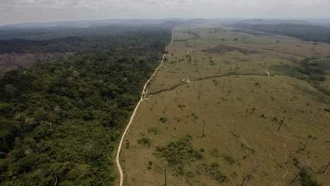 Une image «graphique» de déforestation...