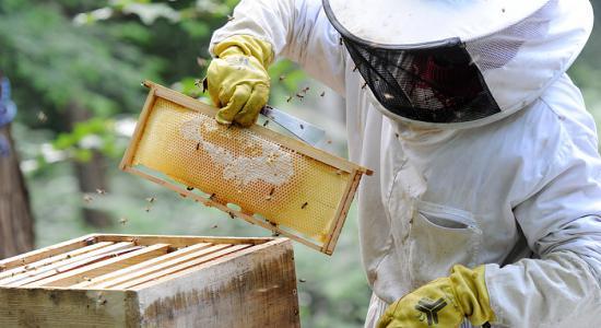 Les néonicotinoïdes de Syngenta et Bayer sont tenus pour responsables du déclin des abeilles