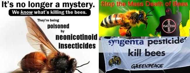 Insecticides. Un massacre et des complices, de facto: Syngenta et Bayer