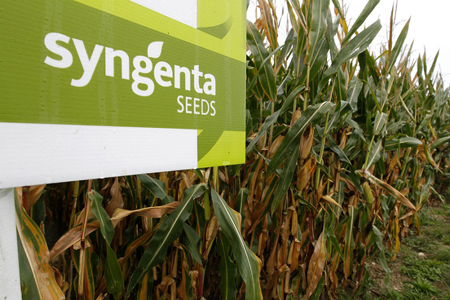 syngenta-seeds-semences