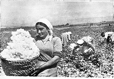 440px-Armenian_cotton
