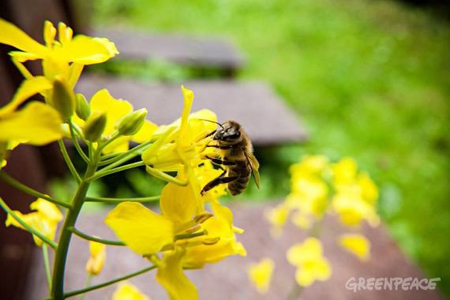 abejas-1-570