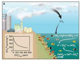 Consequences_des_emissions_de_CO2