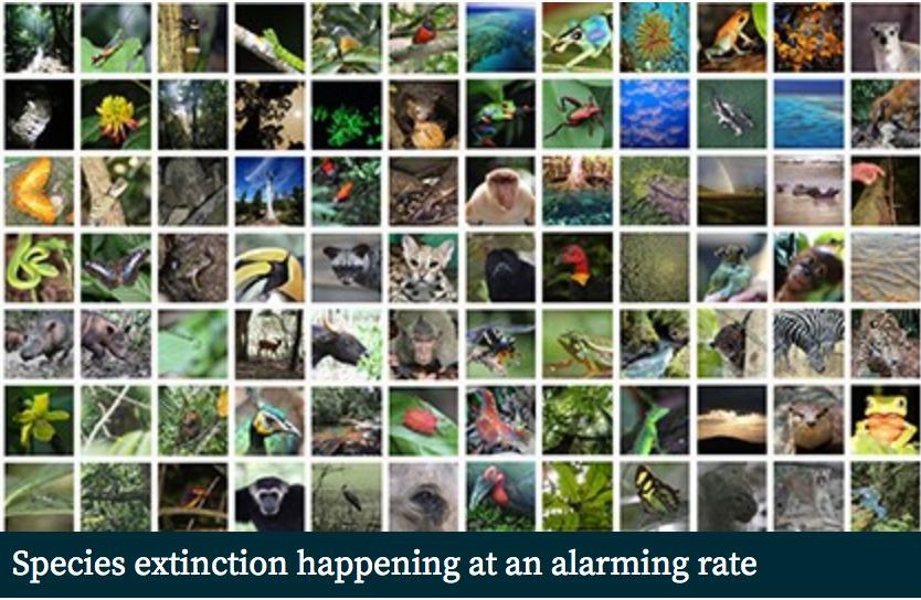 SpeciesExtinction